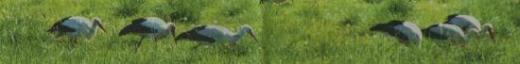 GiAllg-12-05-09-1-Storchennest